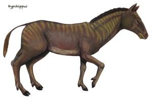 Hypohippus